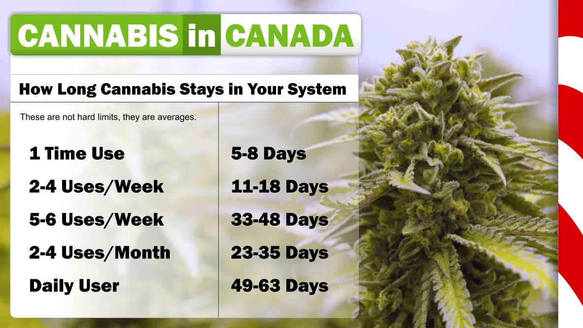 Guide on how long cannabis THC stays in your body