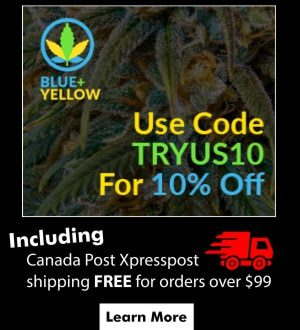 blue+yellow-canadian-online-dispensary-coupon-code-TCB