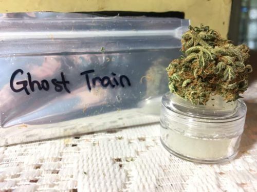 thehighclub-out-of-the-box-ghost-train-strain