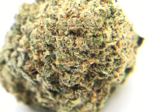 the-vision-strain-review-6