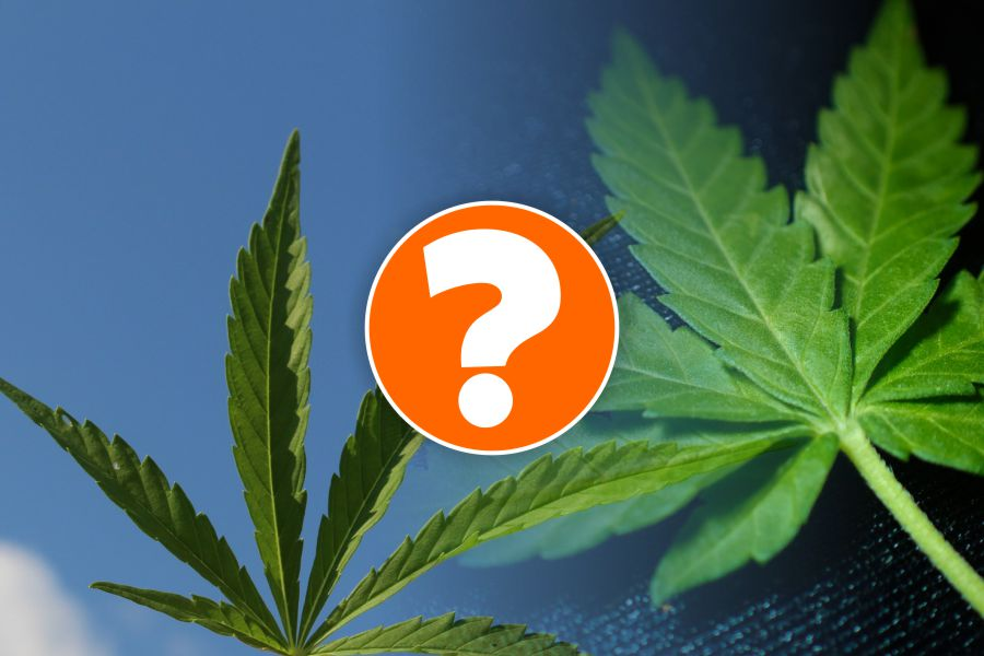 pot-for-thought-best-strains-for-sex