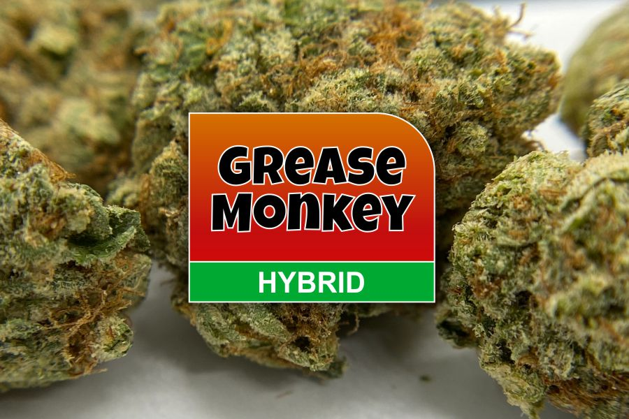 Grease Monkey Strain Review & Info