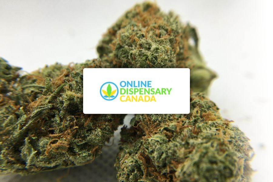 Online Dispensary Canada Reviews and Ratings