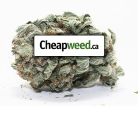 Cheapweed.ca – Buy Cheap Weed Online