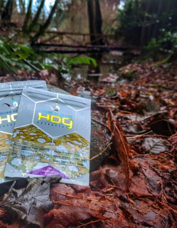 Hog-Extracts and House of Glass Shatter